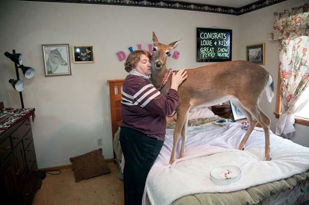 Οι πιο παράξενες & αστείες φωτογραφίες ζώων του 2012 (32)