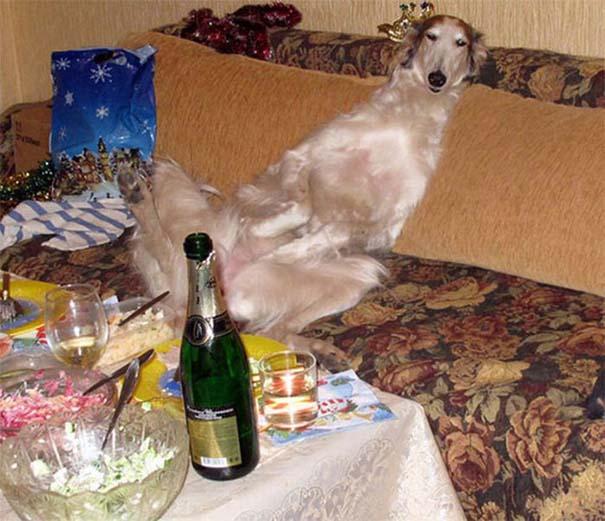 Οι πιο παράξενες & αστείες φωτογραφίες ζώων του 2012 (35)