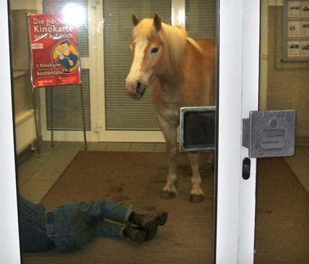 Οι πιο παράξενες & αστείες φωτογραφίες ζώων του 2012 (37)