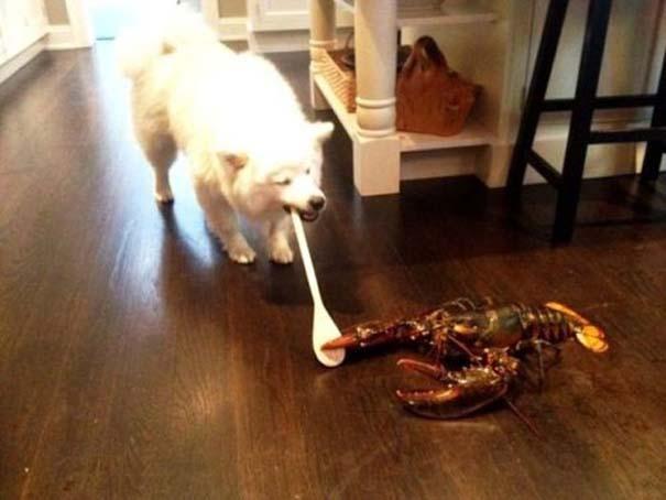 Οι πιο παράξενες & αστείες φωτογραφίες ζώων του 2012 (41)