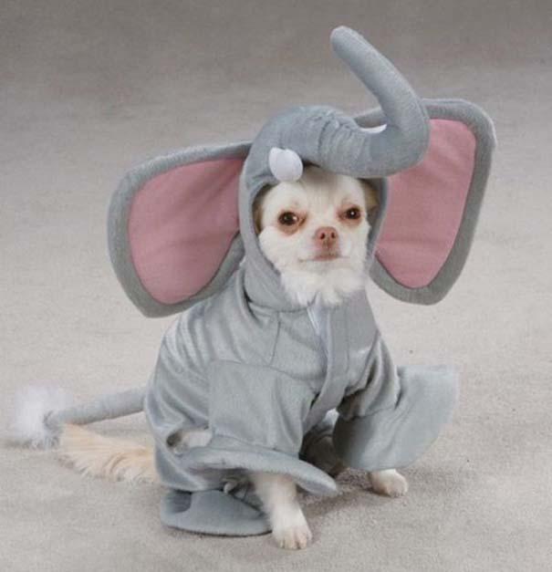 Οι πιο παράξενες & αστείες φωτογραφίες ζώων του 2012 (42)