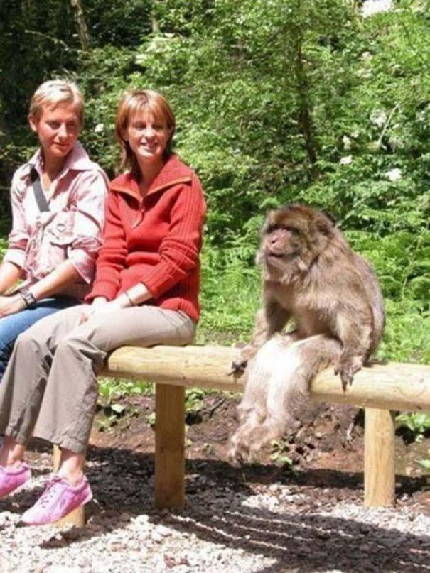 Οι πιο παράξενες & αστείες φωτογραφίες ζώων του 2012 (43)