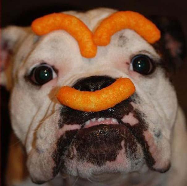 Οι πιο παράξενες & αστείες φωτογραφίες ζώων του 2012 (47)