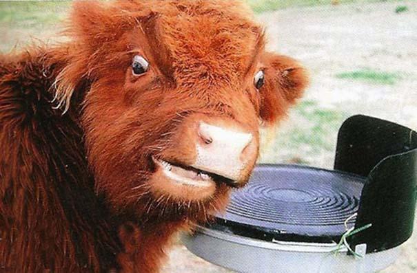 Οι πιο παράξενες & αστείες φωτογραφίες ζώων του 2012 (49)