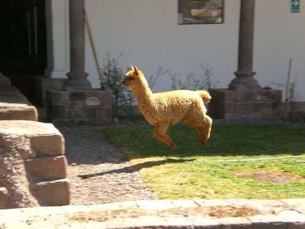 Οι πιο παράξενες & αστείες φωτογραφίες ζώων του 2012 (52)