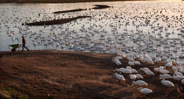 Η λίμνη των κύκνων | Φωτογραφία της ημέρας