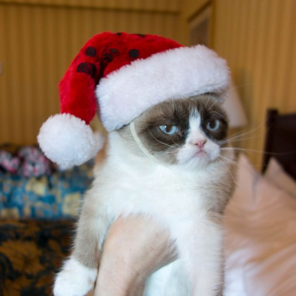 Τα Χριστούγεννα δεν αρέσουν σε όλους... | Φωτογραφία της ημέρας