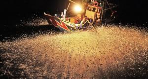Εκπληκτικά στιγμιότυπα από ψάρεμα με φωτοβολίδες (Video)