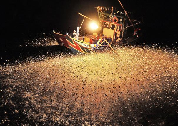 Ψάρεμα με φωτοβολίδες