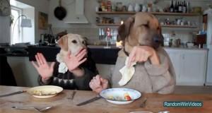 Τα πιο αστεία, τυχερά & εντυπωσιακά στιγμιότυπα του 2012 (Video)
