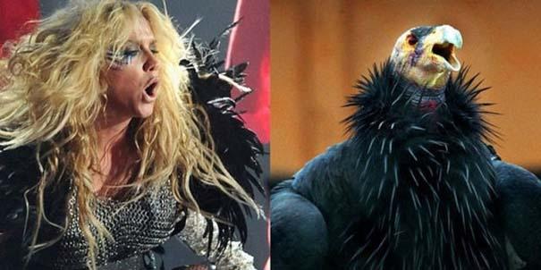 Αν οι αστέρες της μουσικής ήταν πουλιά (1)