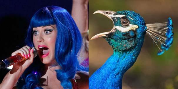 Αν οι αστέρες της μουσικής ήταν πουλιά (3)