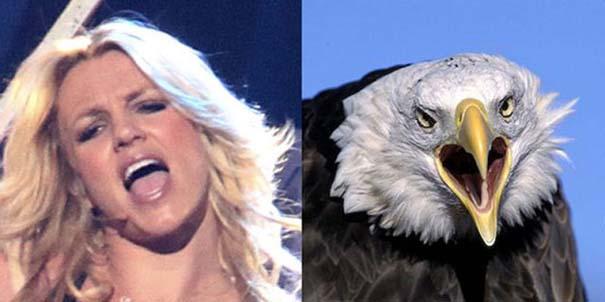 Αν οι αστέρες της μουσικής ήταν πουλιά (4)