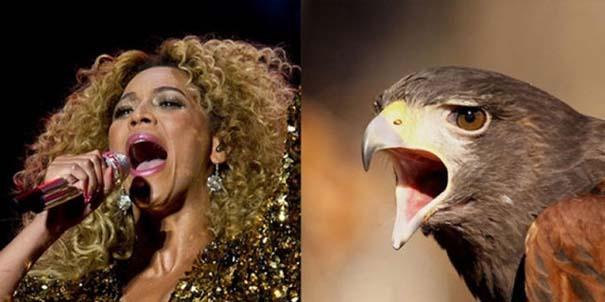 Αν οι αστέρες της μουσικής ήταν πουλιά (5)