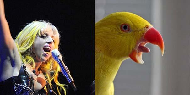 Αν οι αστέρες της μουσικής ήταν πουλιά (7)