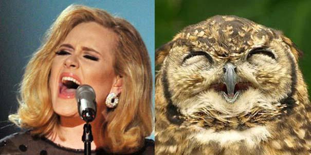 Αν οι αστέρες της μουσικής ήταν πουλιά (10)