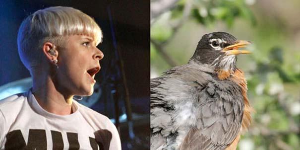 Αν οι αστέρες της μουσικής ήταν πουλιά (13)