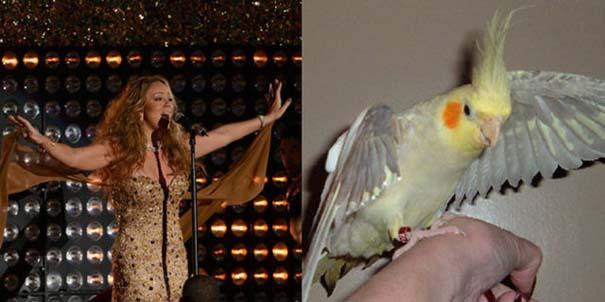 Αν οι αστέρες της μουσικής ήταν πουλιά (21)