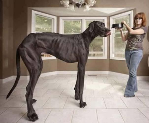 Απίστευτες κι όμως αληθινές φωτογραφίες ζώων (4)