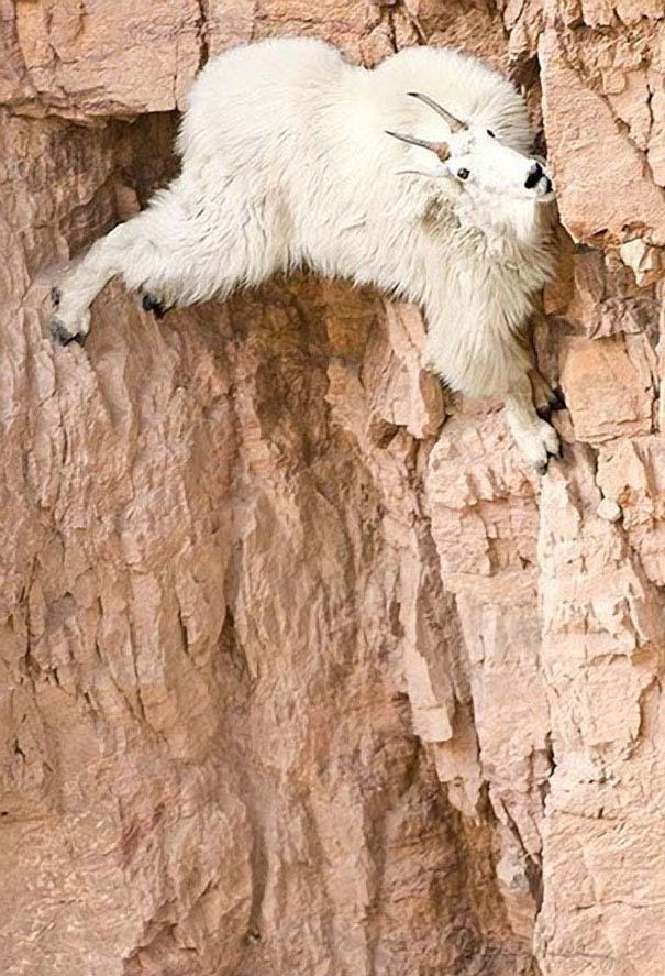Απίστευτες κι όμως αληθινές φωτογραφίες ζώων (5)