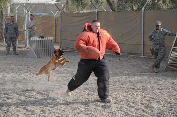 Στιγμή απόλυτου τρόμου κατά τη διάρκεια εκπαίδευσης σκύλου (1)