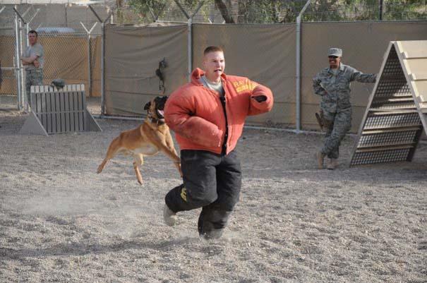 Στιγμή απόλυτου τρόμου κατά τη διάρκεια εκπαίδευσης σκύλου (2)
