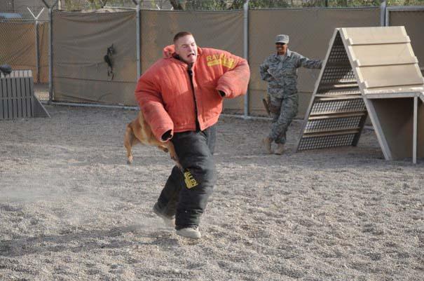 Στιγμή απόλυτου τρόμου κατά τη διάρκεια εκπαίδευσης σκύλου (3)