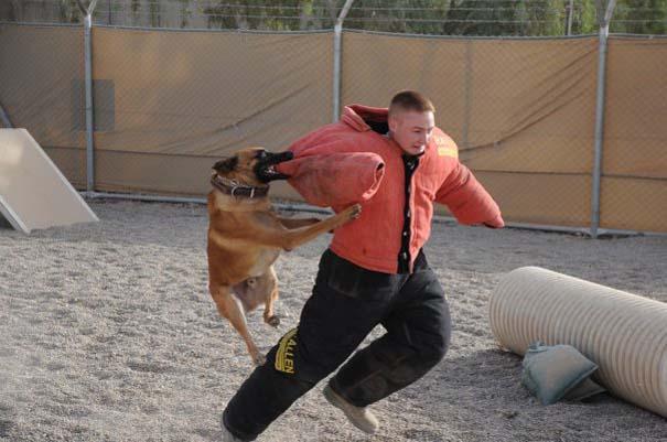 Στιγμή απόλυτου τρόμου κατά τη διάρκεια εκπαίδευσης σκύλου (4)