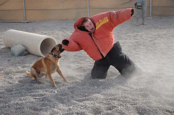 Στιγμή απόλυτου τρόμου κατά τη διάρκεια εκπαίδευσης σκύλου (5)