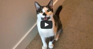 8 σημάδια που δείχνουν ότι η γάτα σας είναι στην πραγματικότητα σκύλος! (Video)