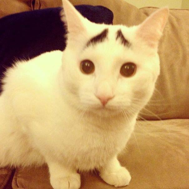 Γάτα με φρύδια (2)
