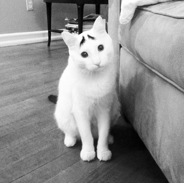 Γάτα με φρύδια (3)