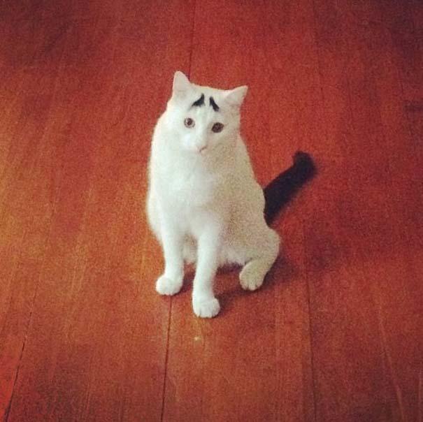 Γάτα με φρύδια (4)