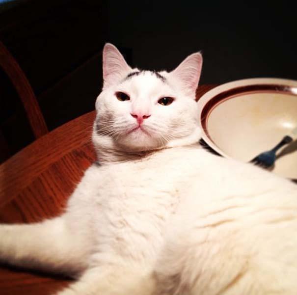 Γάτα με φρύδια (5)