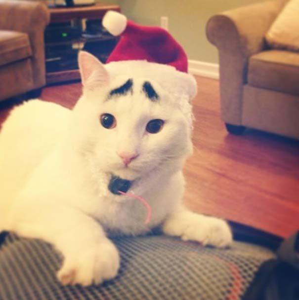 Γάτα με φρύδια (6)