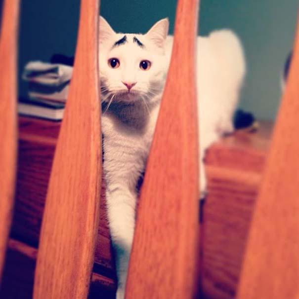 Γάτα με φρύδια (7)