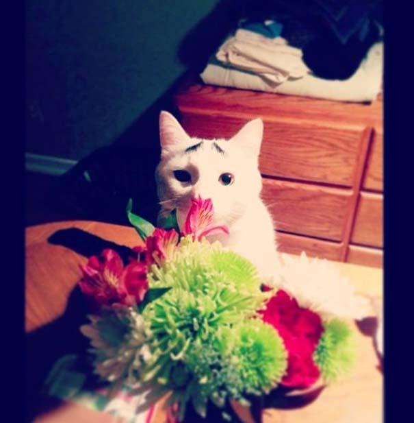 Γάτα με φρύδια (8)