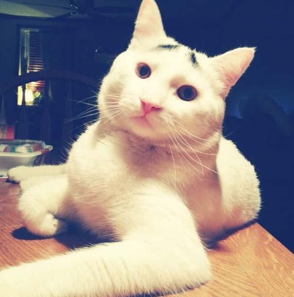 Γάτα με φρύδια (9)