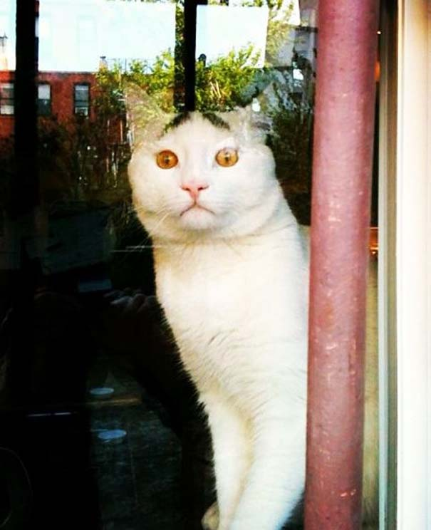 Γάτα με φρύδια (10)
