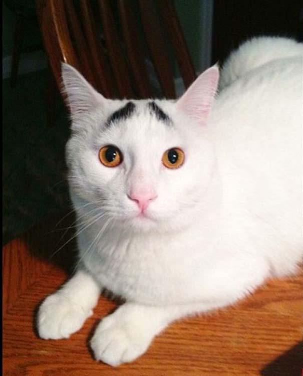 Γάτα με φρύδια (11)