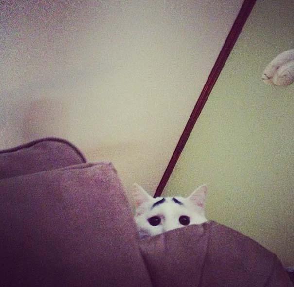 Γάτα με φρύδια (12)
