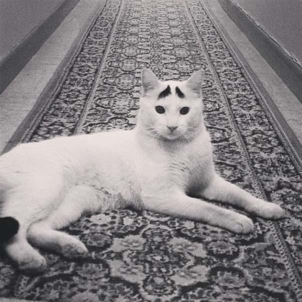 Γάτα με φρύδια (13)