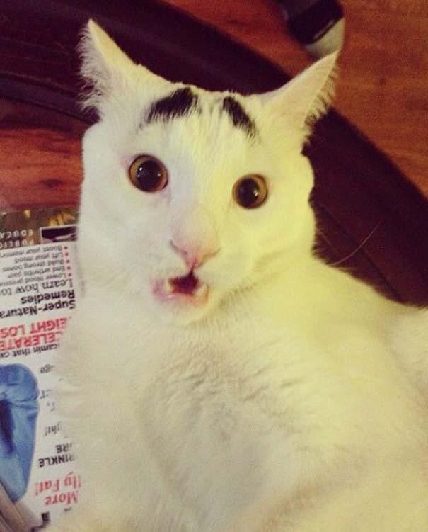 Γάτα με φρύδια (15)