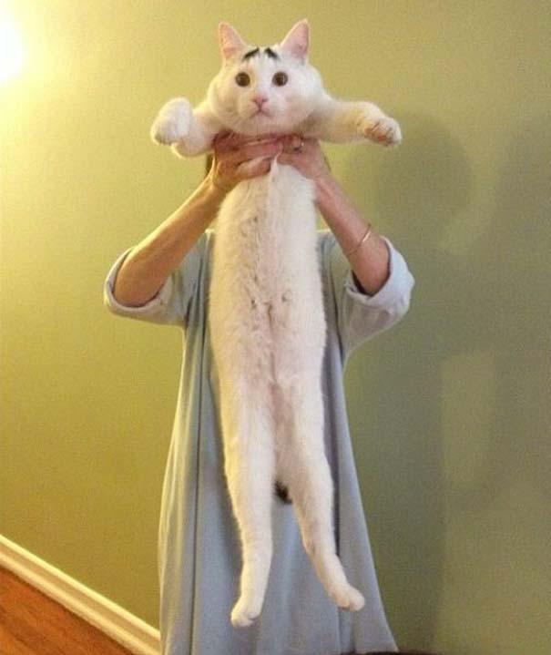 Γάτα με φρύδια (17)