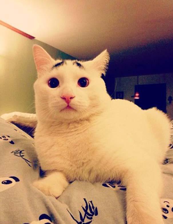 Γάτα με φρύδια (21)
