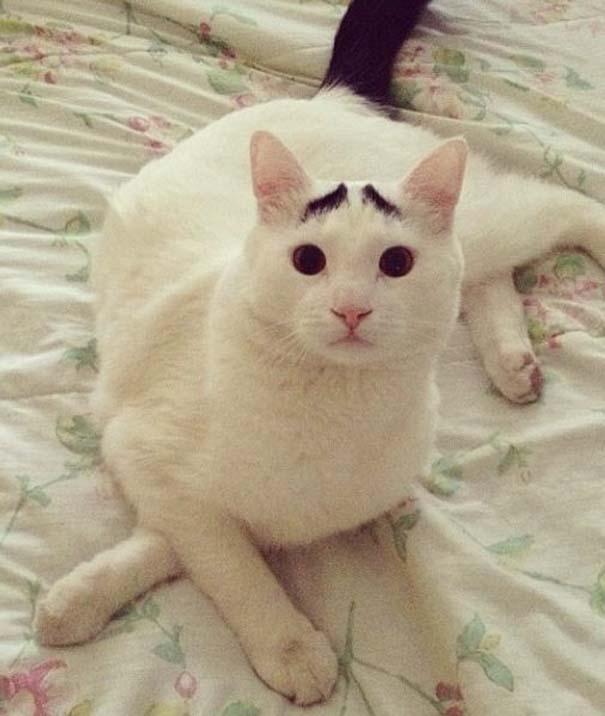 Γάτα με φρύδια (22)