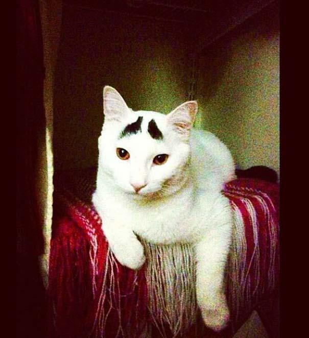 Γάτα με φρύδια (25)