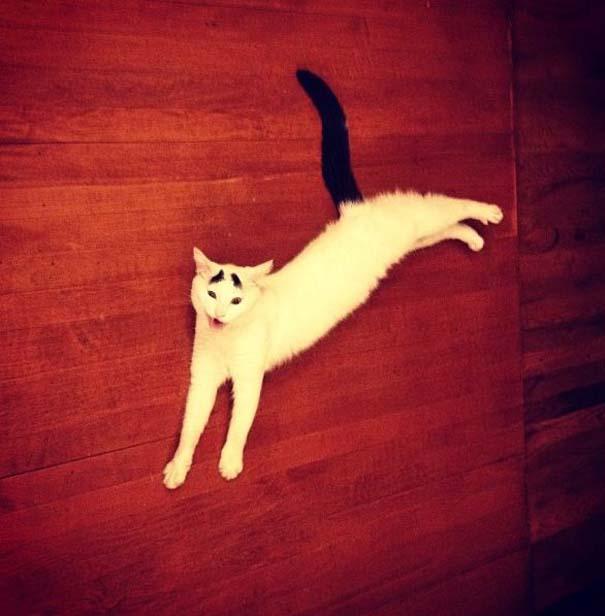 Γάτα με φρύδια (27)