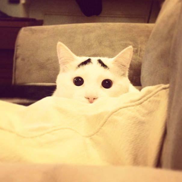 Γάτα με φρύδια (28)
