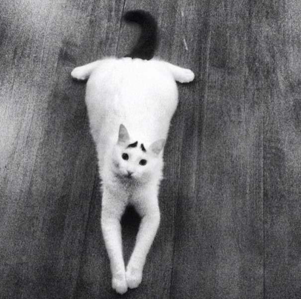 Γάτα με φρύδια (29)